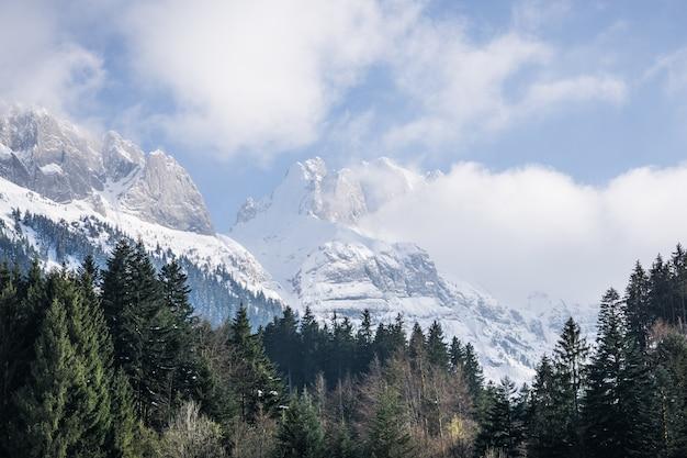 Bomen met besneeuwde bergen