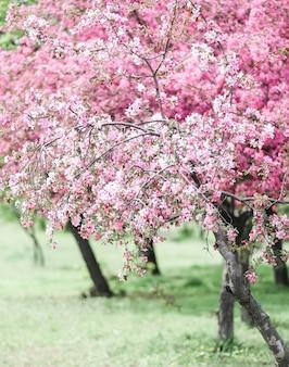Bomen met bloeiende roze bloei