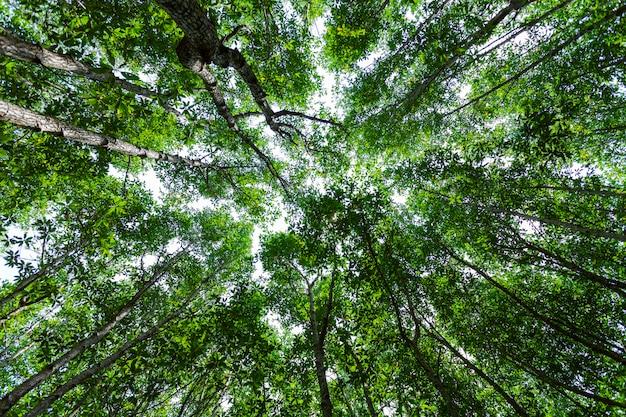 Bomen met bosgroei. natuur groene mangrove bos achtergronden