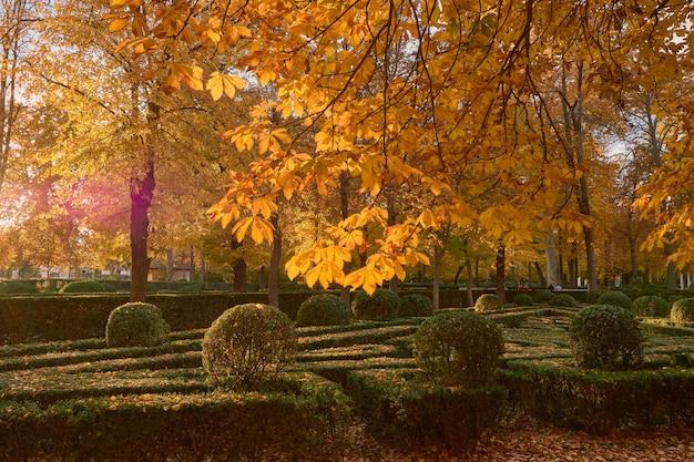 Bomen met gele bladeren in de tuin van de parterre in de herfst