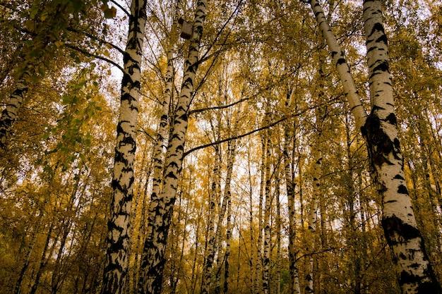 Bomen met gele bladeren
