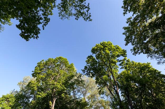Bomen met groen blad in de zomer, het bladerdek van de bomen wordt verlicht door fel zonlicht