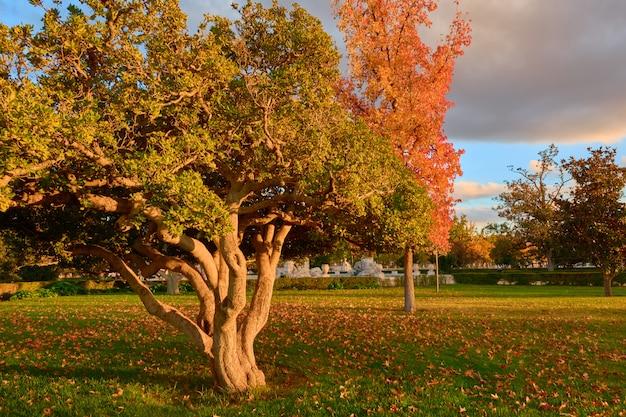 Bomen met groene en bruine bladeren in de tuin van de parterre in de herfst