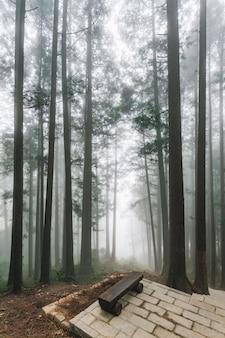 Bomen met mist in het bos met houten zetel op steenplatform in alishan.