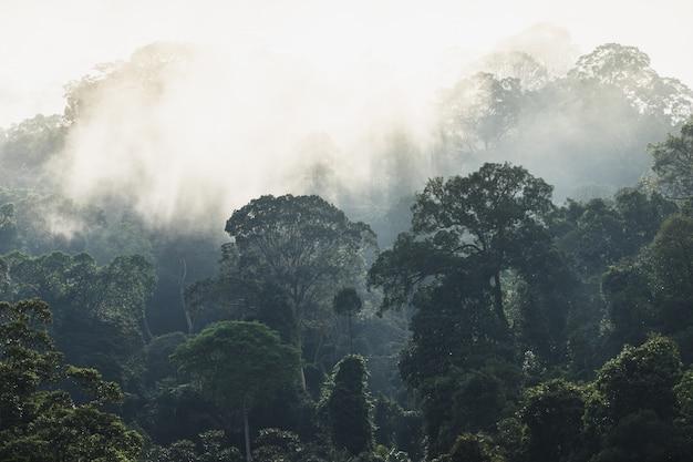 Bomen met mist na het regenen op de heuvel in tropisch regenwoud