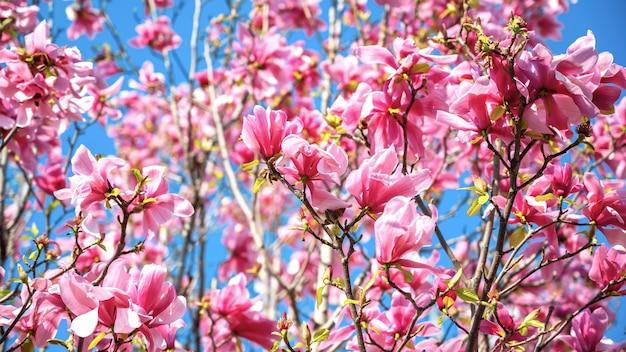 Bomen met roze bloemen