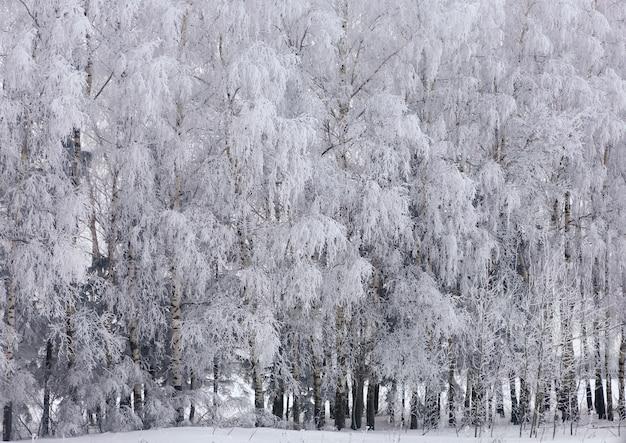 Bomen met sneeuw in de winter