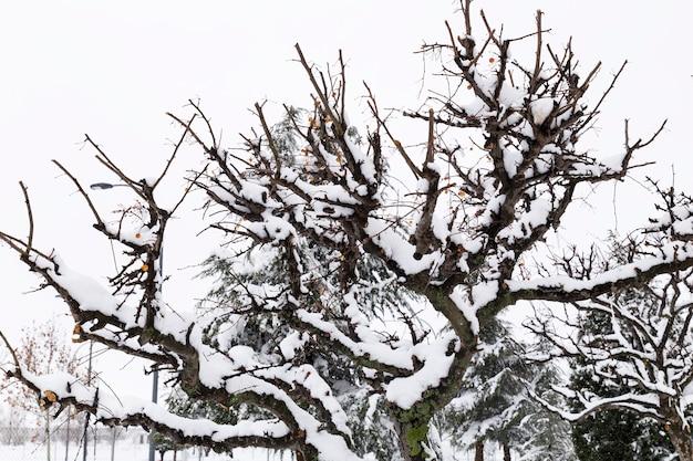 Bomen met sneeuw in hun bekers in een besneeuwd park