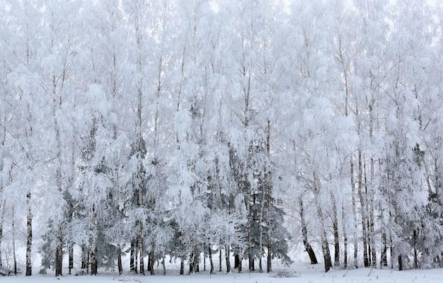 Bomen met sneeuw in winterpark