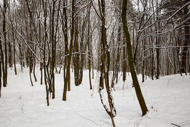 Bomen na de sneeuwval