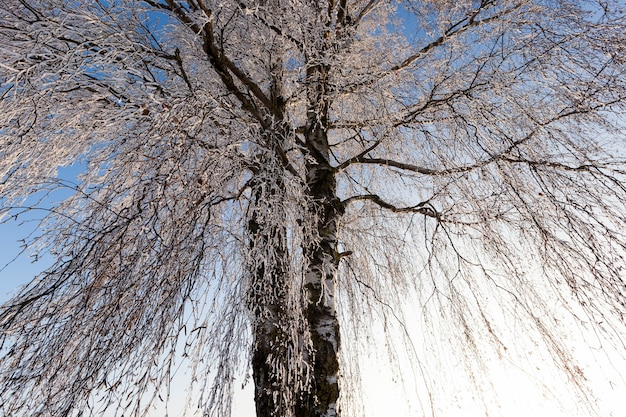 Bomen na sneeuwval