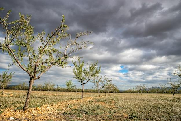 Bomen naast elkaar op een veld overdag