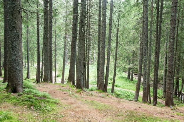 Bomen op bos