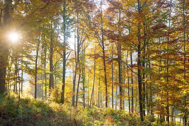 Bomen op de achtergrond van het de herfstseizoen. schoonheid in de natuur