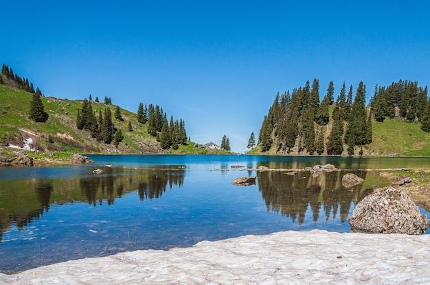 Bomen op de bergen, omringd door het meer lac lioson in zwitserland