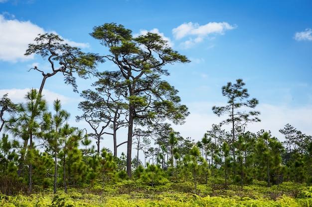 Bomen op de hemelachtergrond.