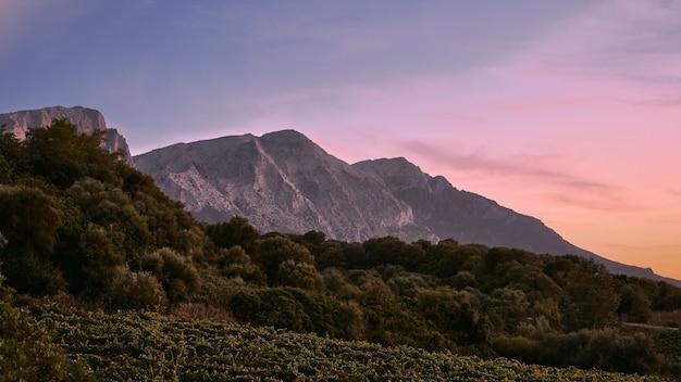 Bomen op de heuvel met bergen in de verte onder een blauwe hemel