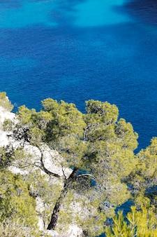 Bomen op de klif Gratis Foto