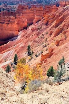Bomen op de navajo trail in bryce canyon, verenigde staten
