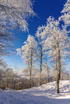 Bomen op de uetliberg-berg in zürich