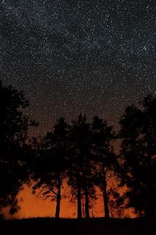 Bomen op een achtergrond van de nachtelijke sterrenhemel