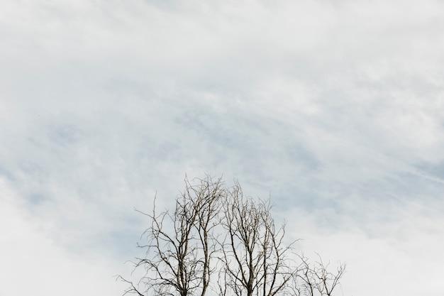 Bomen op een bewolkte hemel