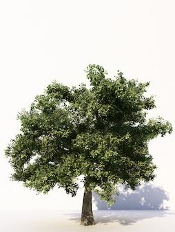Bomen op witte tropische bomen die voor ontwerpreclame en architectuur het 3d teruggeven worden gebruikt