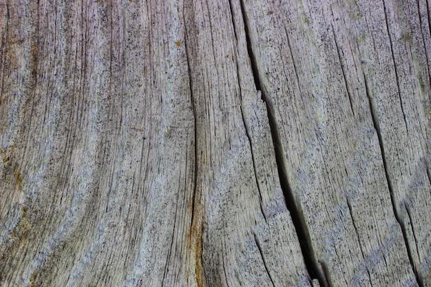 Bomen oppervlak close-up ...
