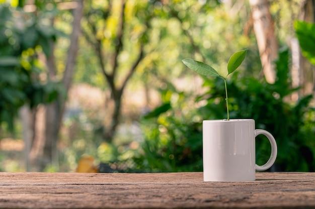 Bomen planten in potten. concept van liefdeplanten. houd van het milieu.