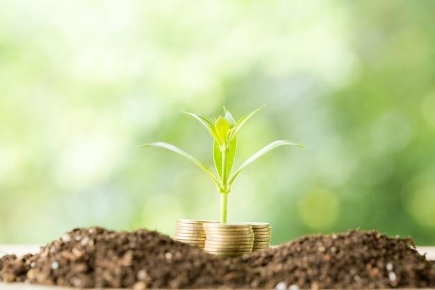Bomen planten op een muntstukstapel met zonlicht