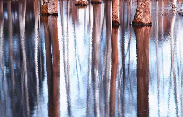 Bomen stam water reflecties landschap achtergrond hd