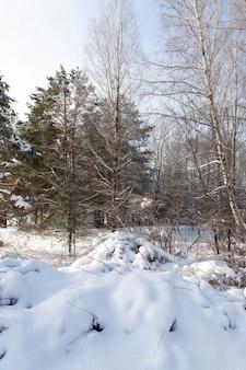Bomen, struiken en andere planten bedekt met sneeuw en vorst in het winterseizoen
