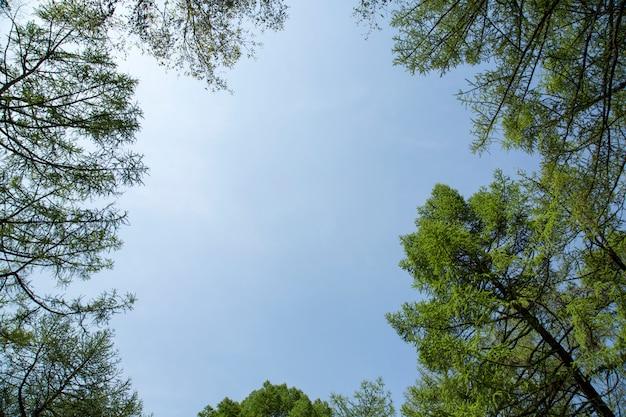 Bomen takken op blauwe hemel natuurlijke frame
