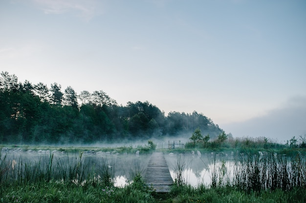 Bomen tegen de achtergrond van meren en natuur met mist