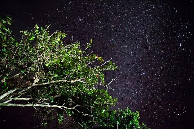 Bomen tegen de nachtelijke hemel in de filippijnen. natuur achtergrond