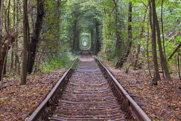 Bomen tunnel in het vroege herfstseizoen