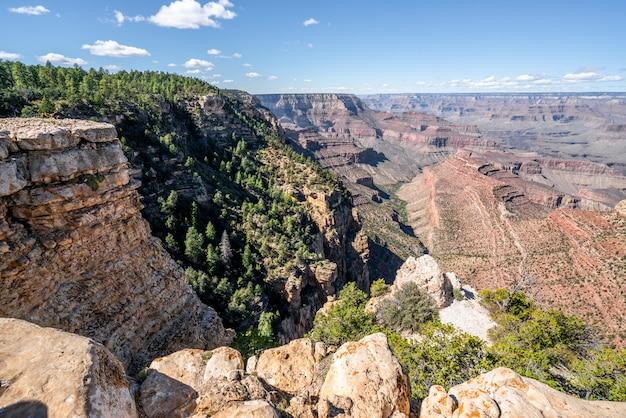 Bomen tussen de grand canyon