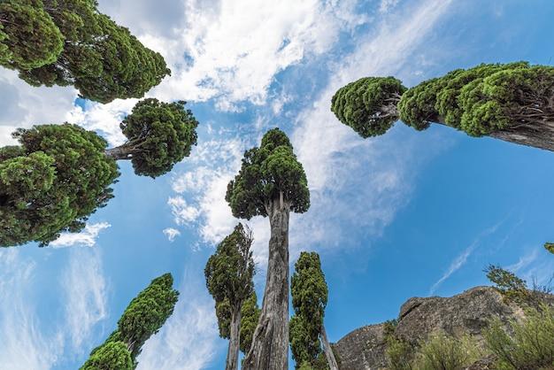 Bomen van onderaf met baldakijn in de lucht