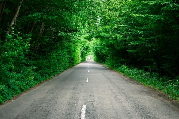 Bomen vormen een kunstmatige tunnel over de weg. prachtig landschap