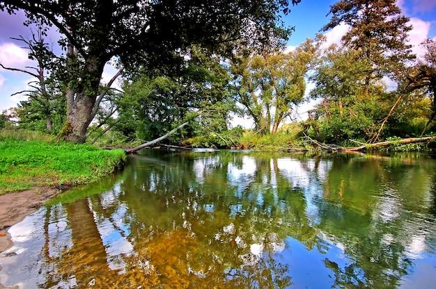 Bomen weerspiegeld in het water