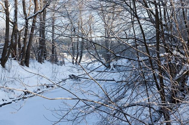Bomen zonder blad in de winter in