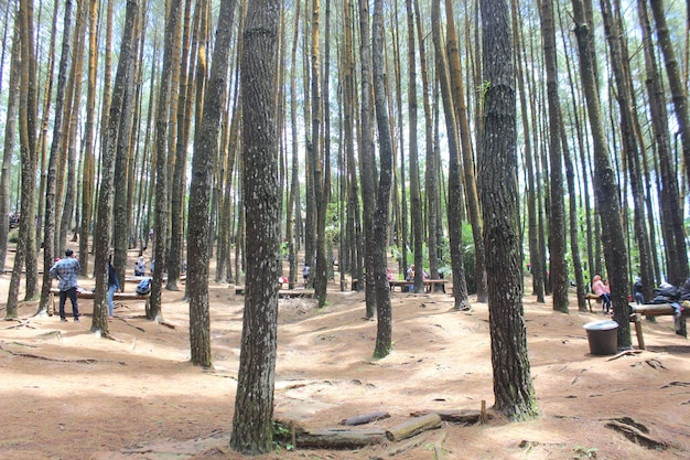Bomen zonder bladeren in het bos