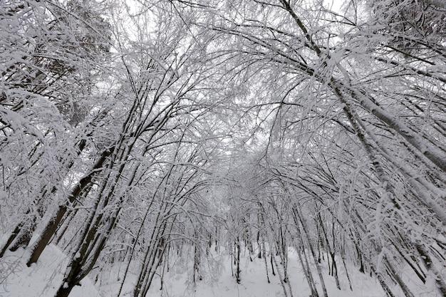 Bomen zonder gebladerte in de winter