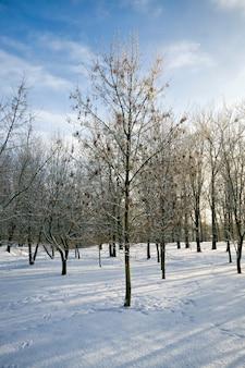 Bomen zonder loof in de winter