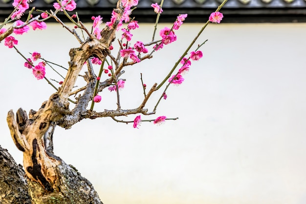 Bonsai met roze bloemen