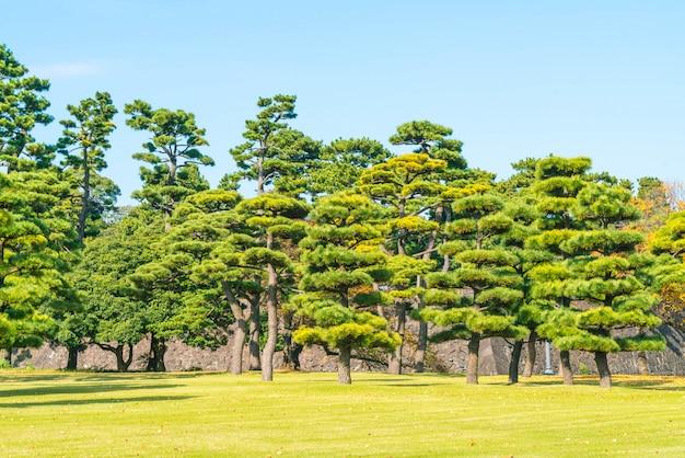 Bonsaiboom in de tuin van keizerpaleis in de stad van tokyo
