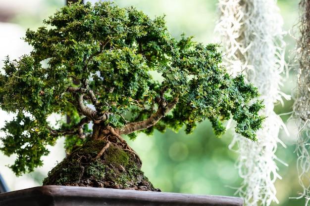 Bonsaiboom in de tuin