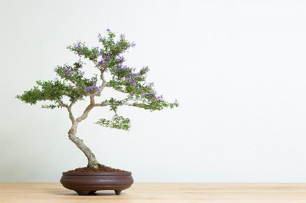Bonsaiboom in pot bij de houten ruimtetextuur backgrond reclame van het lijstexemplaar