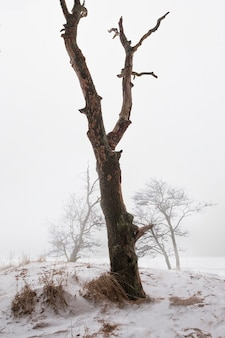 Boom aan de oever van een besneeuwd meer in de winter in de mist in de stijl van minimalisme Premium Foto