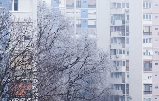 Boom bedekt met de sneeuw met een flatgebouw aan de in zagreb in kroatië